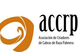 logotipo palmera_
