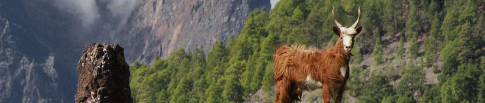 La Cabra Palmera presenta su nuevo Catálogo de Reproductores